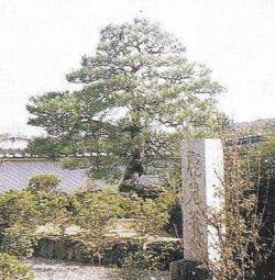 本町常住寺鹿児の松歌碑と三代目鹿児の松